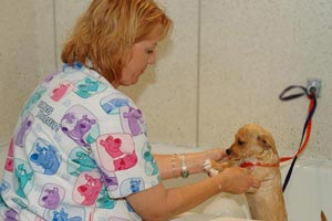 San Juan Animal Hospital offers Bathing Services